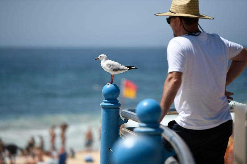 A seagull is seen at Coogee Beach during hot weather in Sydney.