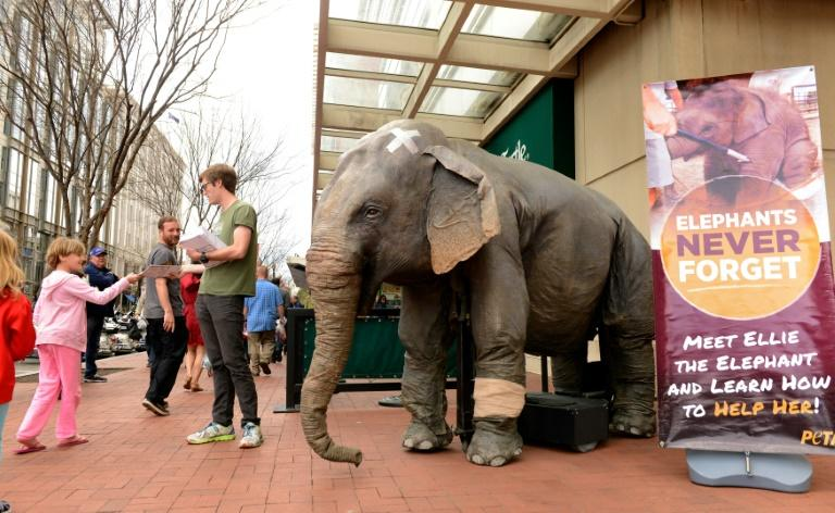 """A man with People for the Ethical Treatment of Animals (PETA) stands next to mechanical elephant """"Ellie"""" as he hands out leaflets outside the Ringling Bros. Circus on April 2, 2016 in Washington, DC"""