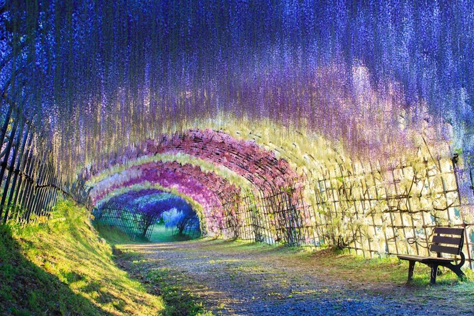 a colorful lush Tunnel