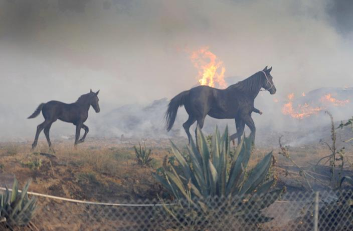 Horses were being evacuated as the Easy Fire rolled through Simi Valley and toward Moorpark on Tierra Rejada Road Wednesday morning.