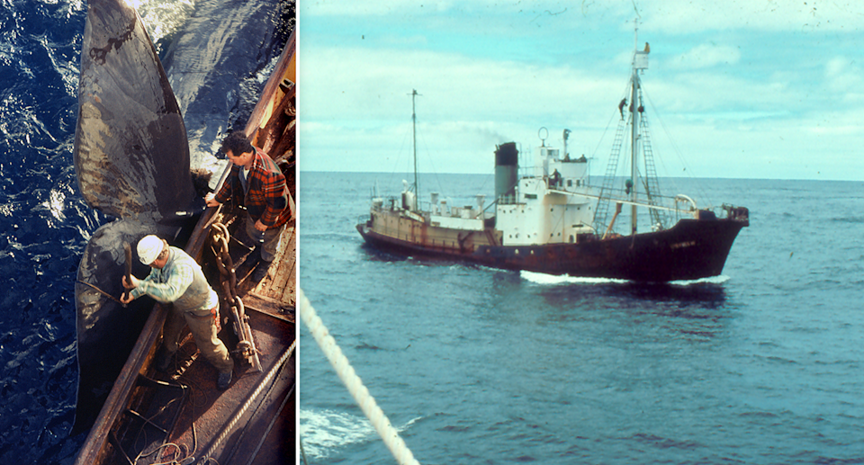 Left - A large whale tail and a whaler on a ship in Western Australia. Right - The Cheynes whaling boat.