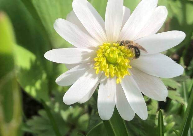 Pollinators could benefit from the mild winter and not be in as much danger from fluctuating spring temperatures.