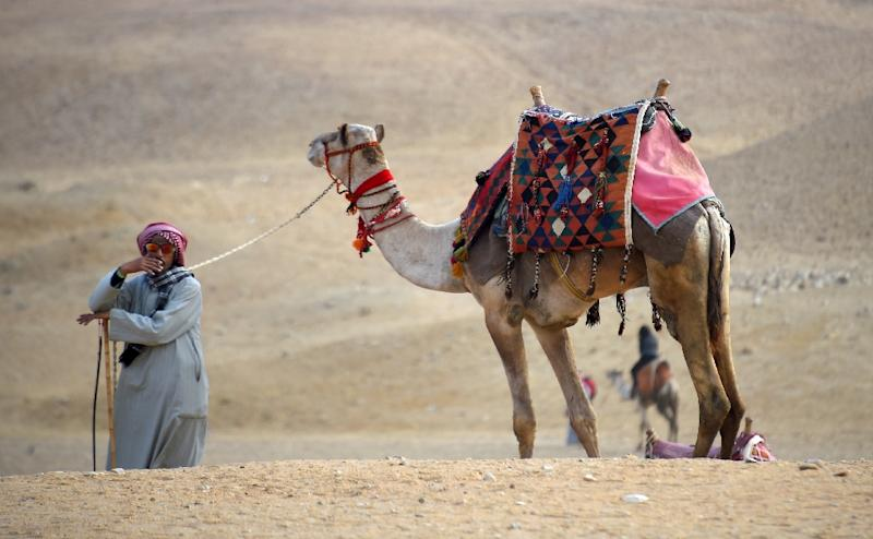 An Egyptian guides a camel at the Giza pyramids on the southwestern outskirts of the Egyptian capital Cairo on December 29, 2018 (AFP Photo/MOHAMED EL-SHAHED                   )