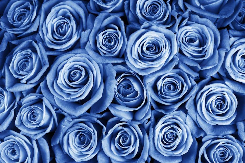 """<p> Since blue roses aren't exactly natural, they symbolize <a href=""""http://roseforlove.com/the-meanings-of-blue-roses-ezp-39"""" rel=""""nofollow noopener"""" target=""""_blank"""" data-ylk=""""slk:mystery and intrigue"""" class=""""link rapid-noclick-resp"""">mystery and intrigue</a>. A perfect option for a secret admirer, no?</p><p><a class=""""link rapid-noclick-resp"""" href=""""https://go.redirectingat.com?id=74968X1596630&url=https%3A%2F%2Fwww.ftd.com%2F33952%2Fextreme-blue-hues-fiesta-rose-bouquet-prd%2FFBBR%2F&sref=https%3A%2F%2Fwww.goodhousekeeping.com%2Fholidays%2Fvalentines-day-ideas%2Fg1352%2Frose-color-meanings%2F"""" rel=""""nofollow noopener"""" target=""""_blank"""" data-ylk=""""slk:SHOP BLUE ROSES"""">SHOP BLUE ROSES</a></p>"""