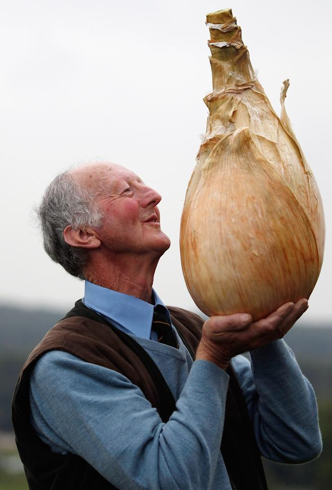 HARROGATE, ENGLAND - SEPTEMBER 16:  Gardener Peter Glazebrook poses for photographers with his world record breaking onion at The Harrogate Autumn Flower Show on September 16, 2011 in Harrogate, England. Peter Glazebrook from Newark, Nottinghamshire claimed a Guinness World Record with his giant onion weighing 8.150kg.  (Photo by Christopher Furlong/Getty Images)