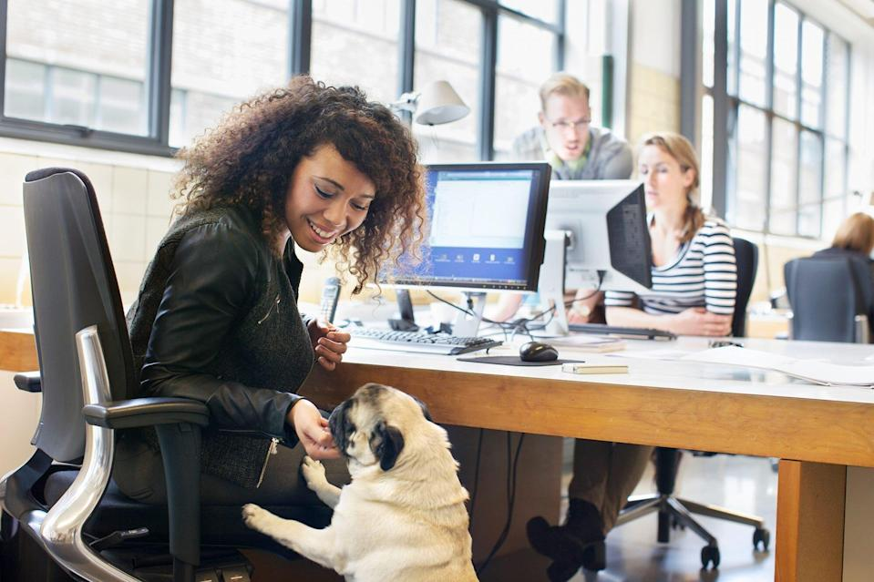 dog interacting at work place