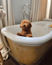 <p>What a grand bath for a small pup! </p>