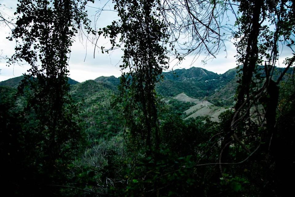 Forest growth in Puerto Rico's main mountain range, the Cordillera Central, where Elba Santos looked for her missing daughter for days.