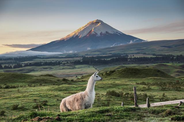 Llama Standing On Field Against Mountains During Sunset