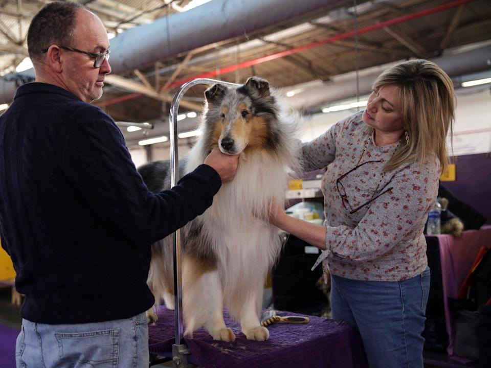 Connie DuBois (r) grooms her collie, Saxon before the show