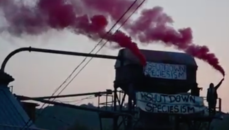 An activist holds a flare above the meat factory (Picture: Smash Speciesism)