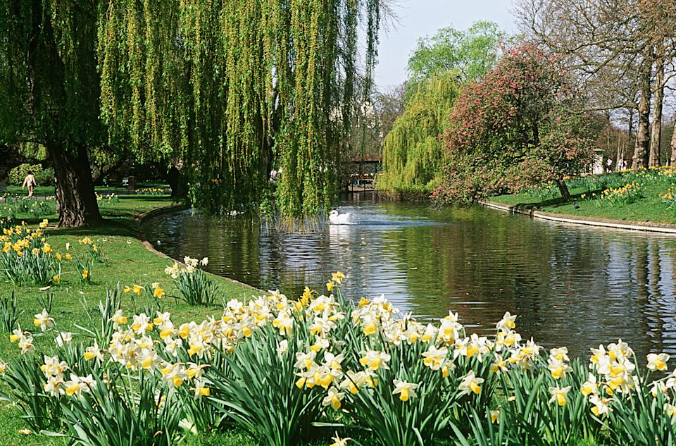 The gardens in Regent's Park are a glorious spot (Getty Images)