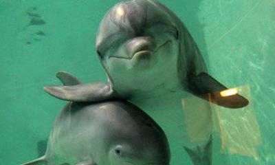 Dolphins 'Deserve Same Rights As Humans'