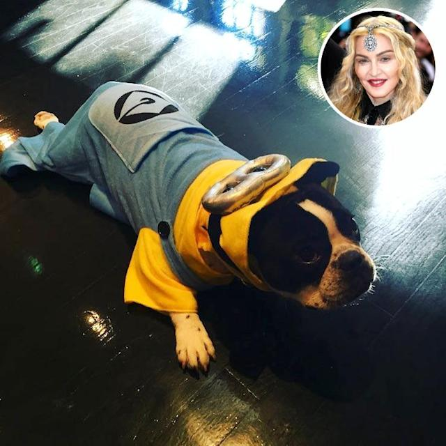 "<p>The Queen of Pop transformed her pooch into a Minion for the spookiest day of the year. She captioned it, ""Happy Halloween from Gypsy,"" but we're not so sure that's what Gypsy was thinking! (Photo: <a href=""https://www.instagram.com/p/BMPO70bh_Wz/?taken-by=madonna"" rel=""nofollow noopener"" target=""_blank"" data-ylk=""slk:Instagram"" class=""link rapid-noclick-resp"">Instagram</a>/Getty Images) </p>"