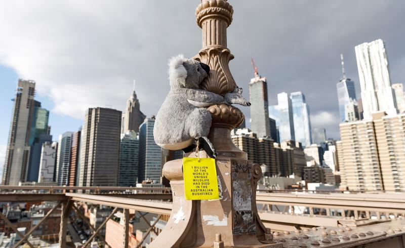 A stuffed koala bear is seen attached to a part of the Brooklyn Bridge in New York, New York, USA, 16 January 2020. The stuffed bears have been placed around New York City by an organization called Koalas of NYC that is trying to raise money for WIRES, Wildlife Information Rescue and Education Service, which is the largest wildlife rescue and charity in Australia that is helping animals effected by that country'Äôs massive brushfires. EFE/EPA/JUSTIN LANE