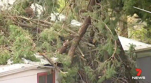 A pine tree crashed through the roof of a home at Kangarilla. Source: 7 News.
