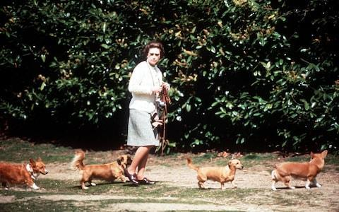 <span>Queen Elizabeth II pictured walking her dogs in 1973 with a corgi leading the way and another ushering from behind</span> <span>Credit: Alpha Press </span>