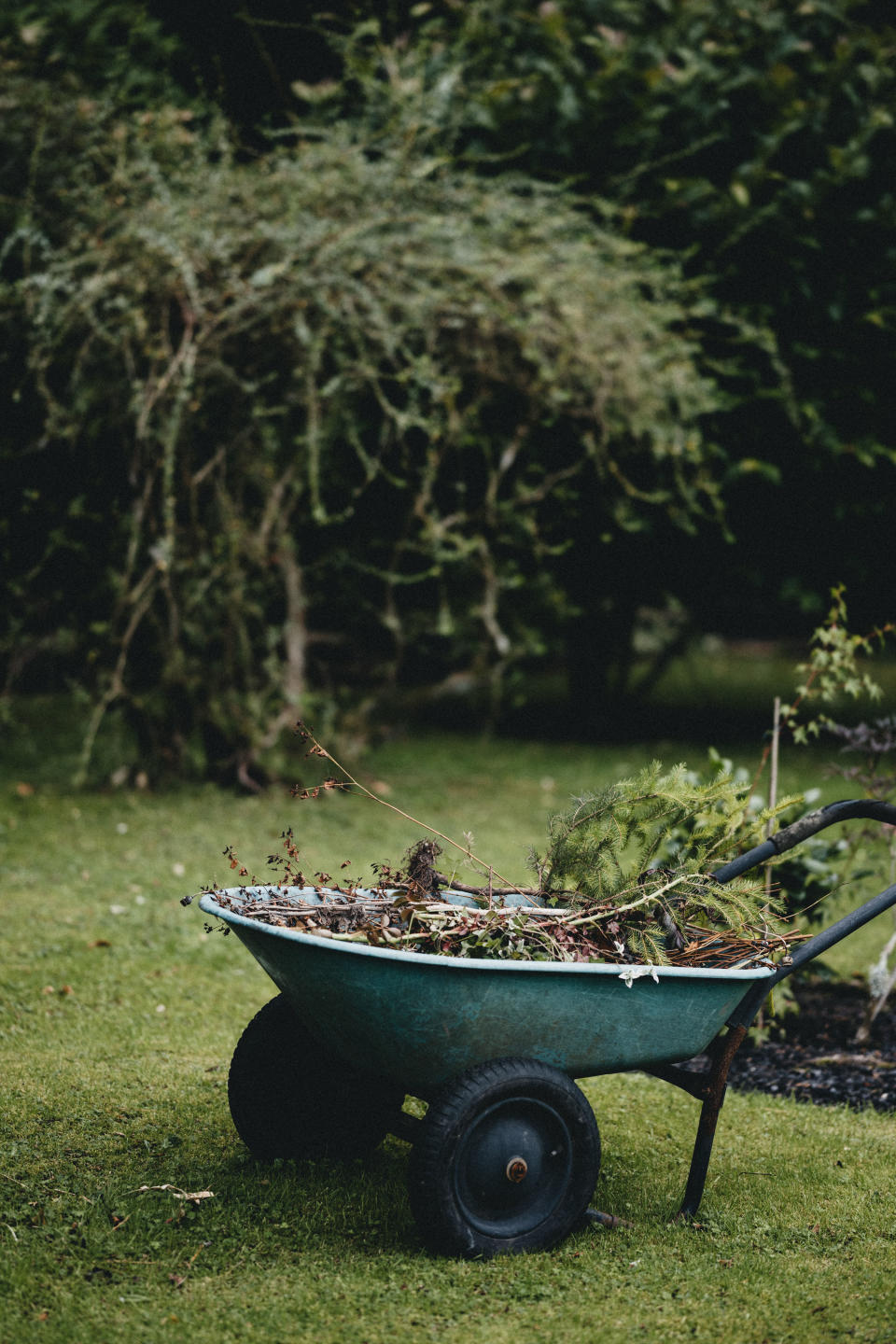 winter garden jobs: wheelbarrow on lawn