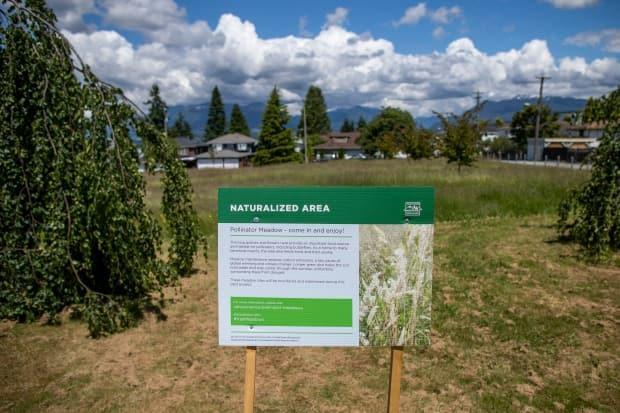 Falaise Park in East Vancouver is part of the park board pilot aimed at creating natural landscapes and attracting more bees and butterflies.