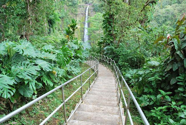 <p>At Akaka Falls in Akaka Falls State Park, located along the northeastern Hamakua Coast, on Hawaii Island, you can see two gorgeous waterfalls on one short hike. Akaka Falls is perhaps the Big Island's most famous waterfall. (Photo: Lana Canada/iStockphoto/Getty Images) </p>