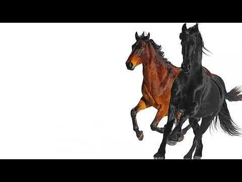 """<p>You don't need a horse to be able to able to jam to this song while going around all your old town roads.</p><p><a href=""""https://www.youtube.com/watch?v=7ysFgElQtjI"""" rel=""""nofollow noopener"""" target=""""_blank"""" data-ylk=""""slk:See the original post on Youtube"""" class=""""link rapid-noclick-resp"""">See the original post on Youtube</a></p>"""
