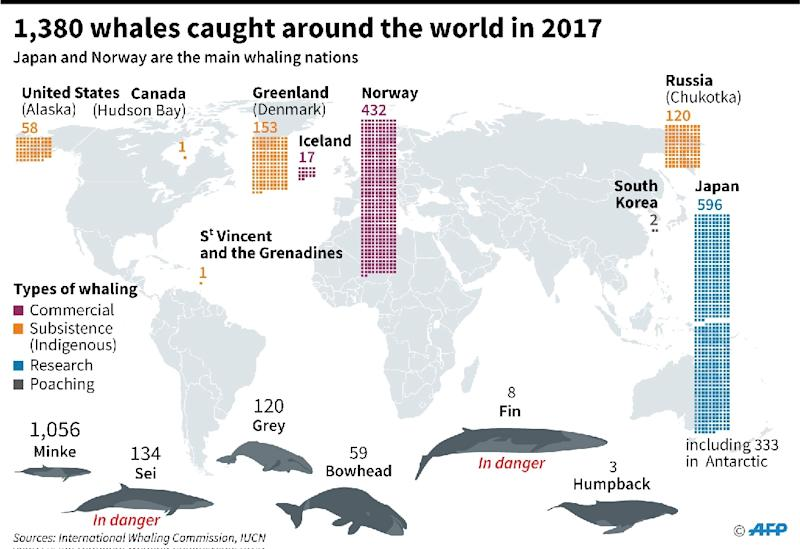 Map locating the main whaling nations and different species of whales caught around the world in 2017. (AFP Photo/Florian SOENEN)