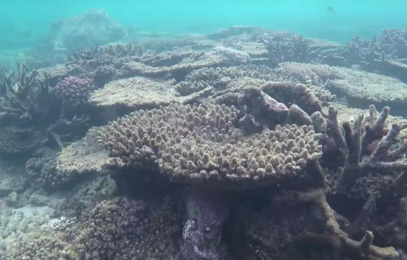 30 percent of Great Barrier Reef Coral Died in 'Catastrophic' 2016 Heatwave