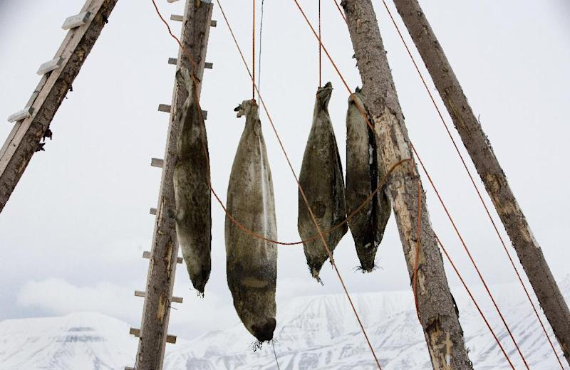 Dead seals hang from a rack outside the Arctic town of Longyearbyen in northern Norway on February 25, 2008 (AFP Photo/Daniel Sannum Lauten)