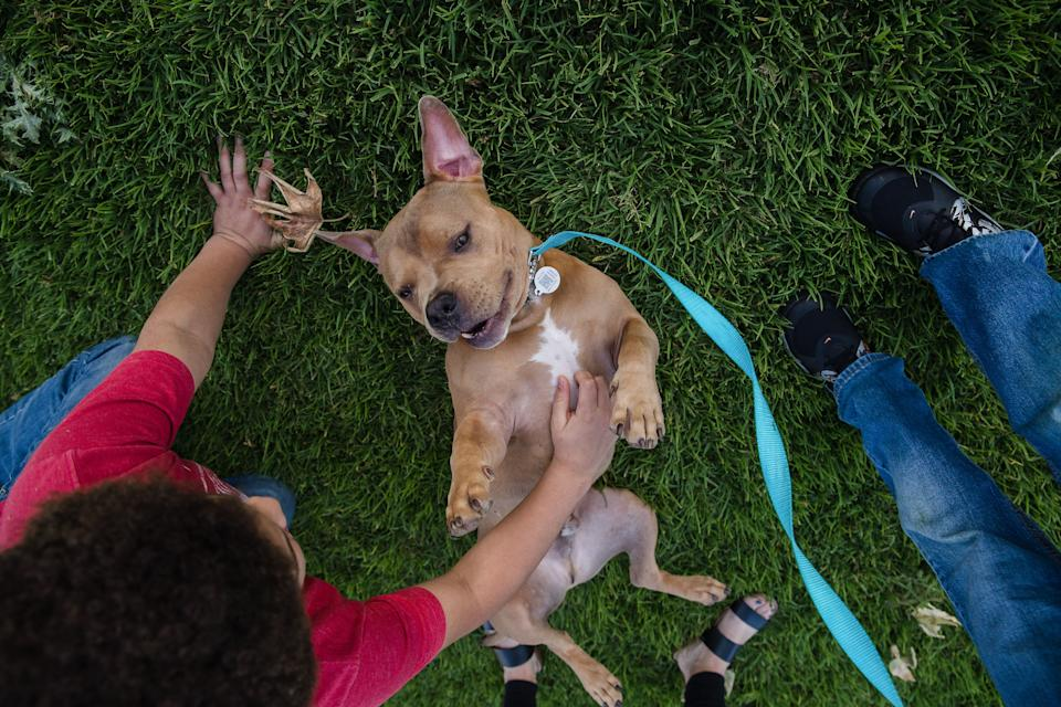 Mase, an adopted pit bull, plays in the grass in Escondido, Calif., April 21, 2020. (Photo by Ariana Drehsler/AFP via Getty Images)