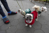 From left, Brooklyn, Prada and Snoop Dog enjoy a walk in the park attached to leashes held by their owner Delon Charlton, far left, in Prospect Park, Sunday, Nov. 15, 2020, in the Brooklyn borough of New York. (AP Photo/Kathy Willens)