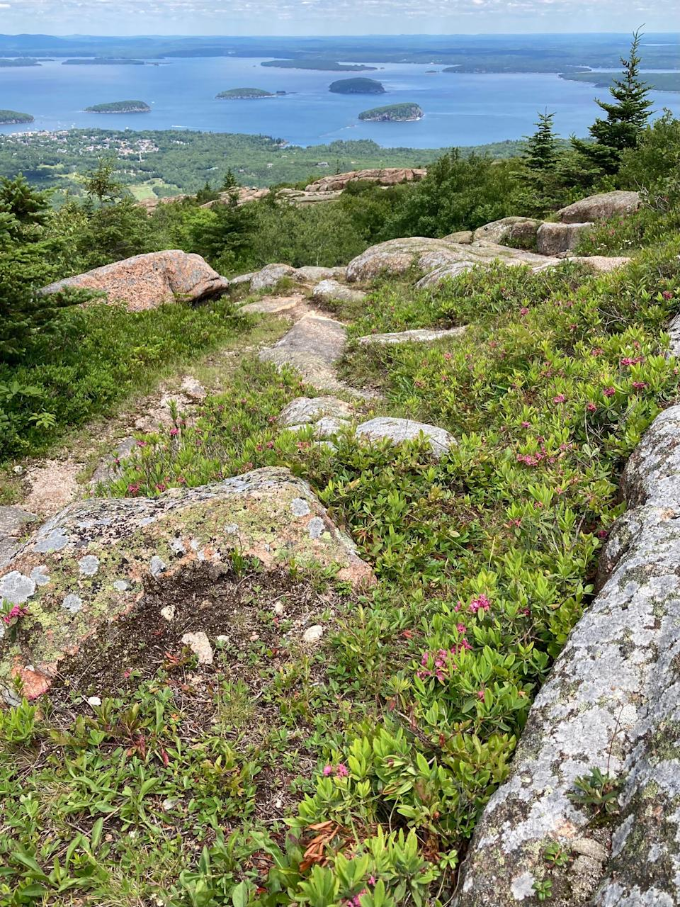 Wildflowers bloom among the rocks atop Cadillac Mountain at Acadia National Park in Maine. This summer, the National Park Service is requiring reservations to drive up Cadillac Summit Road to avoid overcrowding.