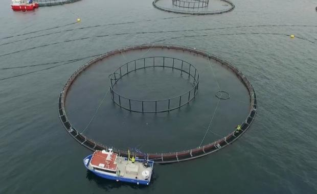 Province prepared for 'significant' investment in Grieg NL aquaculture project