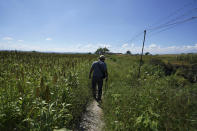 The relative of a missing person inspects an area suspected of holding the bodies of some disappeared persons on the outskirts of Cuautla, Mexico, Tuesday, Oct. 12, 2021. The government's registry of Mexico's missing has grown more than 20% in the past year and now approaches 100,000. (AP Photo/Fernando Llano)