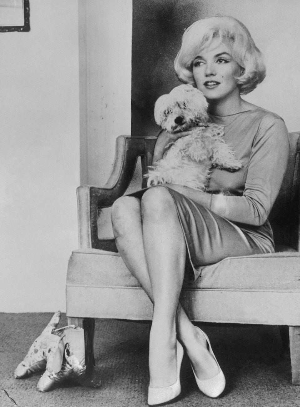 <p>Tired of being typecast as a dumb blond, Marilyn moved to New York City to study at the Actor's Studio. Here, Marilyn is holding her little white dog, Maf. <br></p>