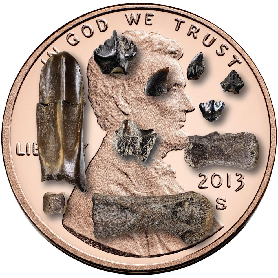 Baby dinosaur bones and teeth found  in Northern Alaska, displayed on a US penny (AFP via Getty Images)