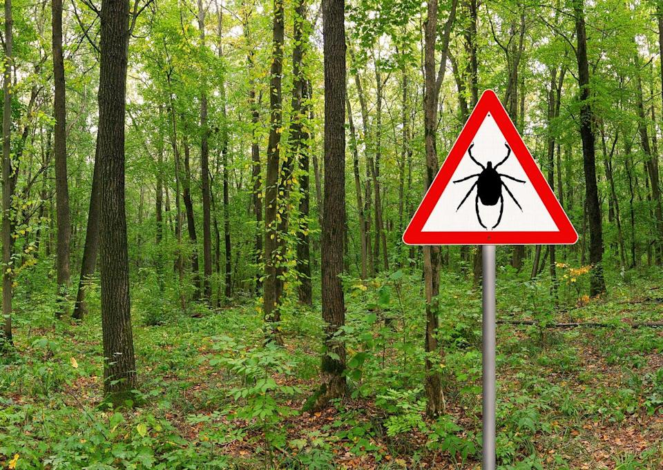 """<span class=""""caption"""">With warm weather comes tick season.</span> <span class=""""attribution""""><span class=""""source"""">(Shutterstock)</span></span>"""