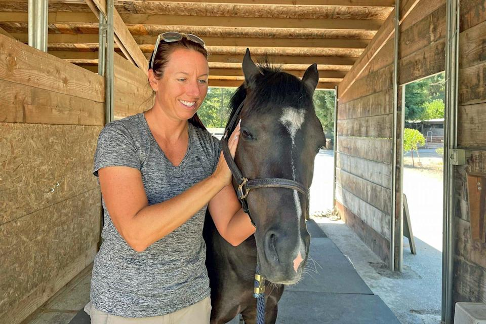 horse in a stable receiving holistic vet care