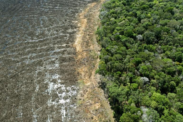 Rampant deforestation will indirectly cause over 180,000 excess heat-related deaths globally this century, the lawsuit argues (AFP/Florian PLAUCHEUR)