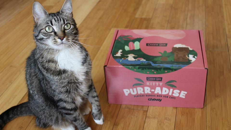 Best cat gifts: Goody Box