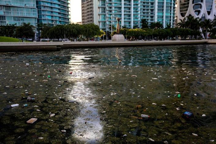 High surface water temperatures led to a sudden drop in oxygen, which led to the fish kill in northern Biscayne Bay last year.