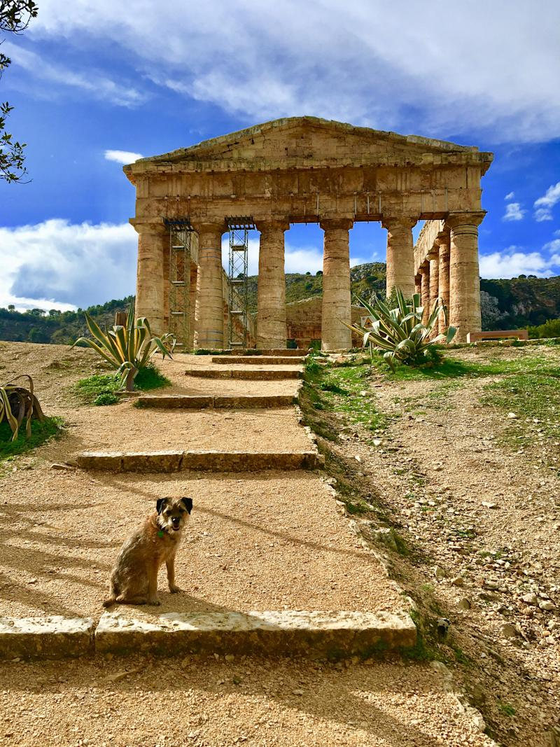 Pete the border terrier at the Temple of Diana, Sicil. (Photo: Caters News)