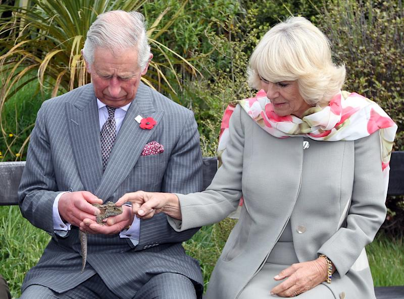 Camilla Parker Bowles encountering a reptile known as a Tuatara on her and Prince Charles's visit to the Orokonui Ecosanctuary in Dunedin, New Zealand, November 2015
