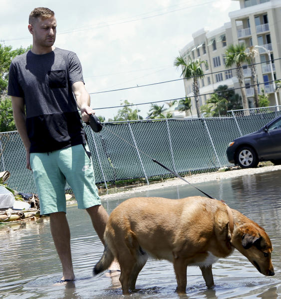 In this June 19, 2019 photo, 27-year-old Ben Honeycutt walks his dog through a flooded Miami street that has drained slowly after rain. ome consider Miami the Ground Zero for any climate-related sea level rise in the U.S. Many local residents and community leaders will be listening keenly for any proposals to stave off the effects of rising seas. (AP Photo/Ellis Rua)
