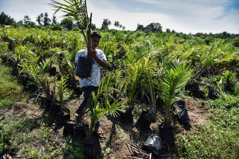 Environmentalists say the damage caused by the production of palm oil, a common ingredient of biodiesel, is unacceptable