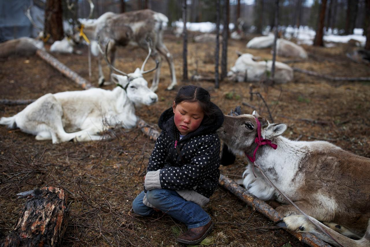 "Tsetse, six-year-old daughter of Dukha herder Erdenebat Chuluu, sits among her family's reindeer in a forest near the village of Tsagaannuur, Khovsgol aimag, Mongolia, April 21, 2018. REUTERS/Thomas Peter   SEARCH ""REINDEER HERDERS"" FOR THIS STORY. SEARCH ""WIDER IMAGE"" FOR ALL STORIES. TPX IMAGES OF THE DAY"