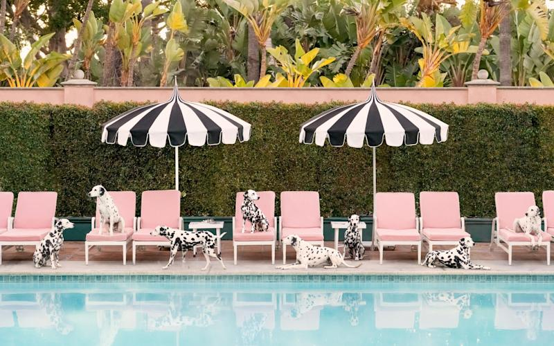 Spotted at the Beverly Hills Hotel - www.graymalin.com @graymalin