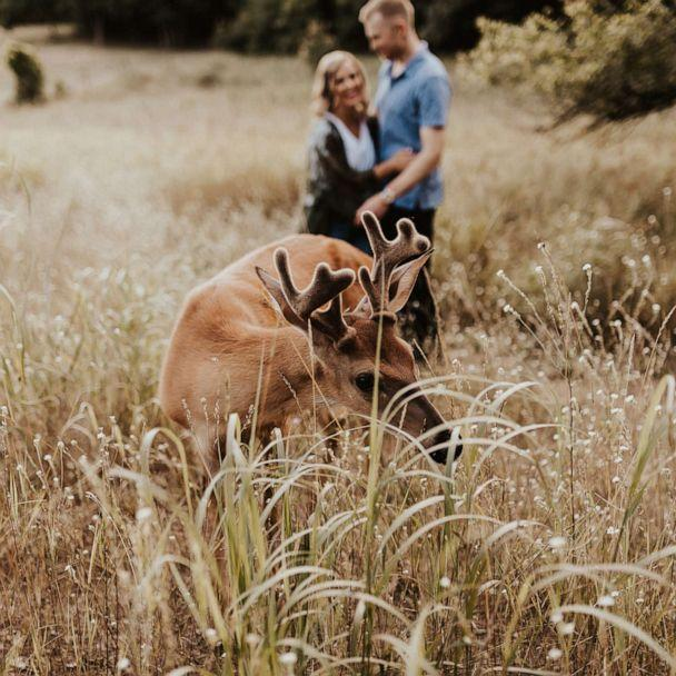 PHOTO: 'We asked for 'naturey' and 'woodsy,' and holy cow that delivered,' Dori Castignola said of the deer that visited her and fiancee Austin Swiercz's photo shoot. (Courtesy Eldina Kovacevic/Inna Kova Photography)