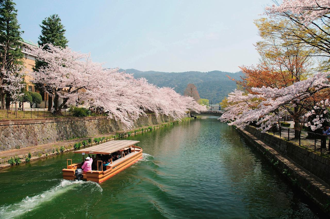 """Forecasters predict that peak sakura will take place in Kyoto starting on March 23 and will last about a week in <a href=""""https://www.cntraveler.com/story/cherry-blossom-season-japan?mbid=synd_yahoo_rss"""">maximum bloom</a>. To fully experience it, start by meandering down the Philosopher's Path, the historic footpath that runs along the river, to the Silver Temple or Ginkakuji—the entire route is lined with trees and the surface of the water will be carpeted with color. The city is postcard-pretty before that, though, thanks to the surfeit of ume, or plum blossoms, which burst into flower early in the month. See a forest of 2,000 such trees at the Kitano-Tenmangu Shrine or escape the crowds at Shosei-en, a secret garden near the main train station in the heart of town. Book a room at the just-opened, luxury ryokan Sowaka, a 23-room hotel close to Kodaji temple that combines a restored ryōtei, or restaurant, with a new annex overseen by architect Shigenori Uoya. While you're there, don't miss the chance to sample some Ki-No-Bi, Japan's first <a href=""""https://www.cntraveler.com/story/come-to-kyoto-for-the-sake-stay-for-the-gin?mbid=synd_yahoo_rss"""">small batch gin</a>, which is made in Kyoto, a city with a longstanding reputation for craftsmanship."""