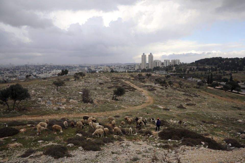 A Palestinian shepherd herds his flock at Givat Hamatos settlement in east Jerusalem, Sunday, Nov. 15, 2020. A settlement watchdog group said Sunday that Israel is moving ahead with new construction of hundreds of homes in the strategic east Jerusalem settlement that threatens to cut off parts of the city claimed by Palestinians from the West Bank. (AP Photo/Mahmoud Illean)