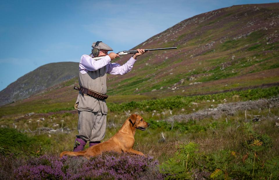 Grouse shooting in Scotland as 'the Glorious 12th', the official start of the grouse shooting season, got underway (Photo: PA)